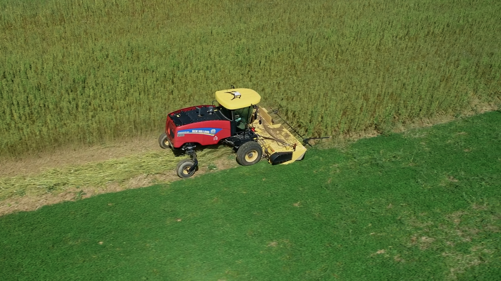 Behind_The_Wheel_Industrial_hemp_harvest_in_North_America